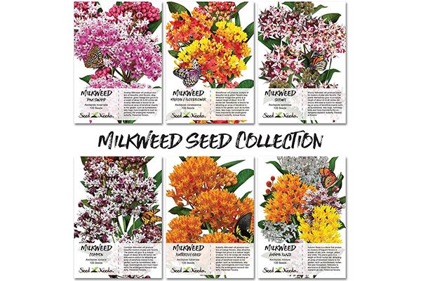Free Butterfly Milkweed Seed Packs