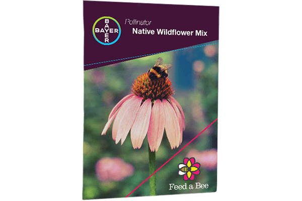 Free Plant Wildflower Seeds